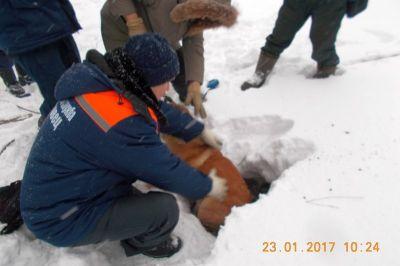 ВЧереповце cотрудники экстренных служб достали изколодца собаку