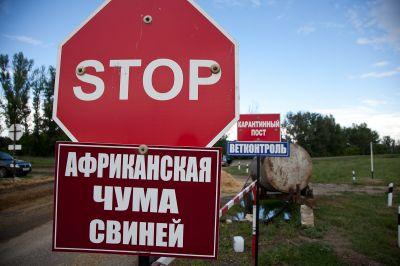 ВЧереповецком иеще 5 районах ввели карантин поафриканской чуме свиней