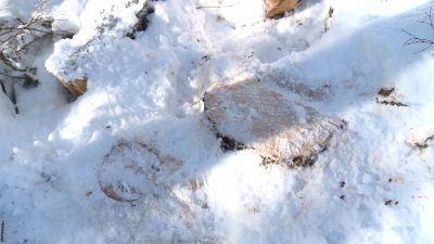 Гражданин Бабушкинского района нелегально нарубил леса на180 тыс. рублей