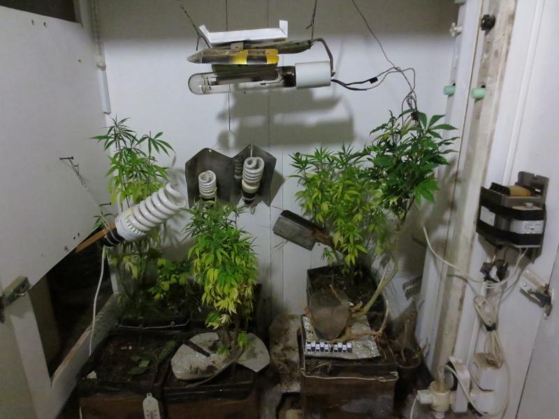 Вологда семена конопли как выводиться из организма марихуана